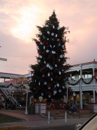 Big tree 1
