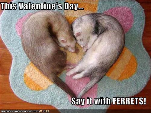 Valentines ferrets