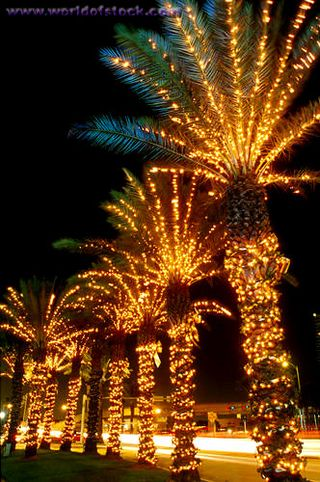 Palm trees Christmas lights