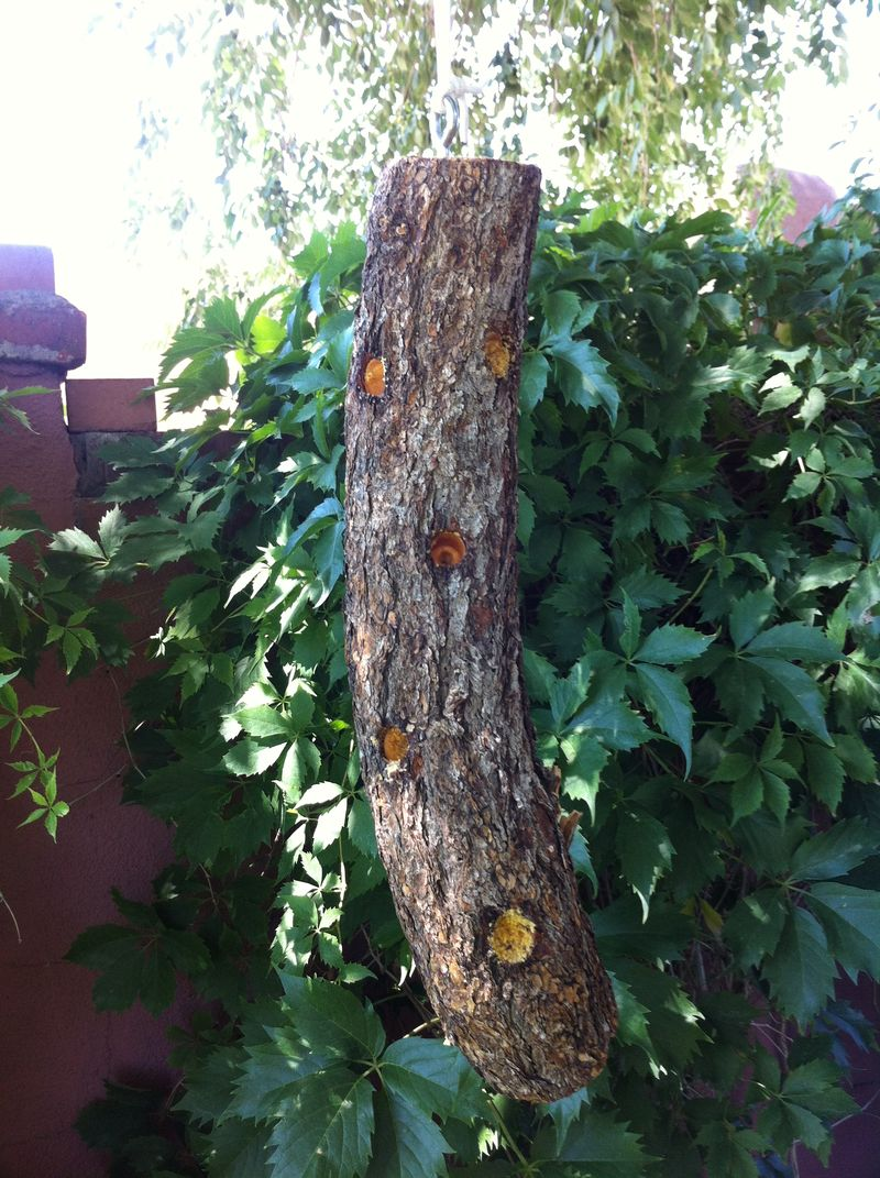 Bark butter log